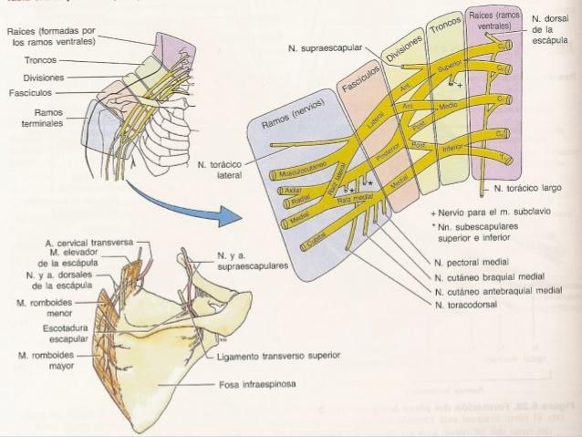 tendinitis de hombro tratamiento